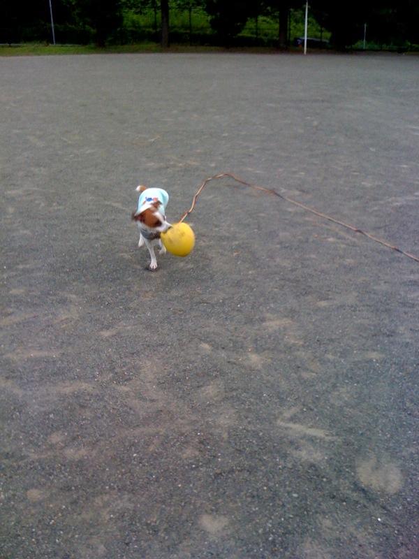 新しいボール♪