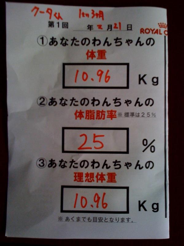 レオン兄貴のアジリティー教室参加!(其の壱)
